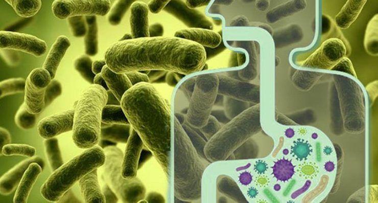 Photo of Probióticos y prebióticos: Creando una mejor salud