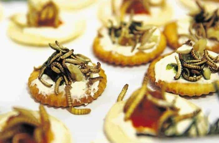 Photo of El arte de comer insectos: Una fuente alternativa de proteínas